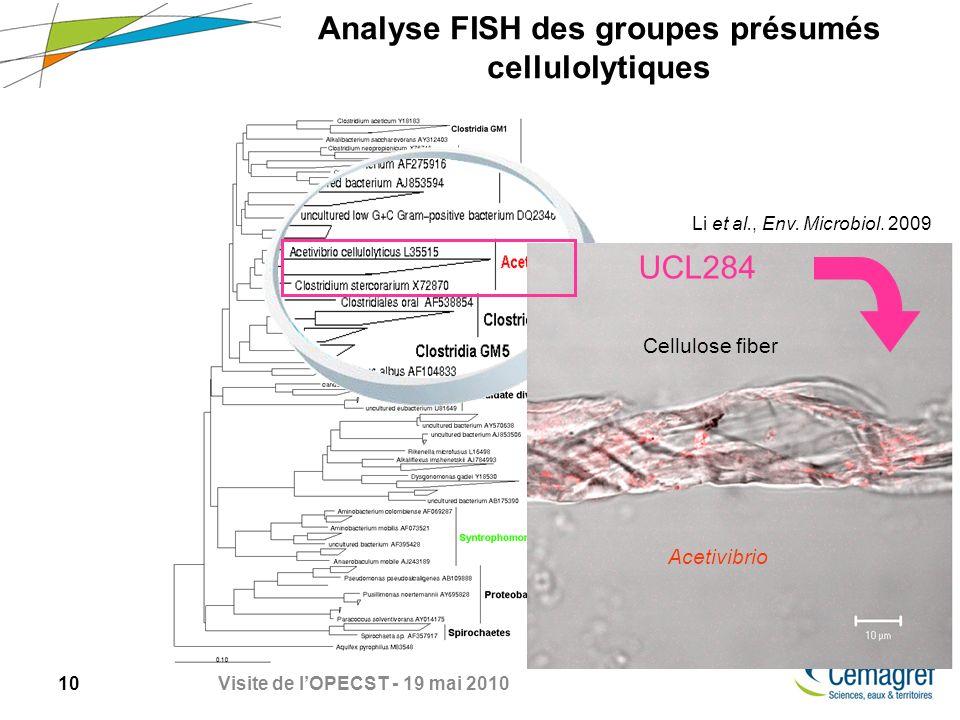 Analyse FISH des groupes présumés cellulolytiques