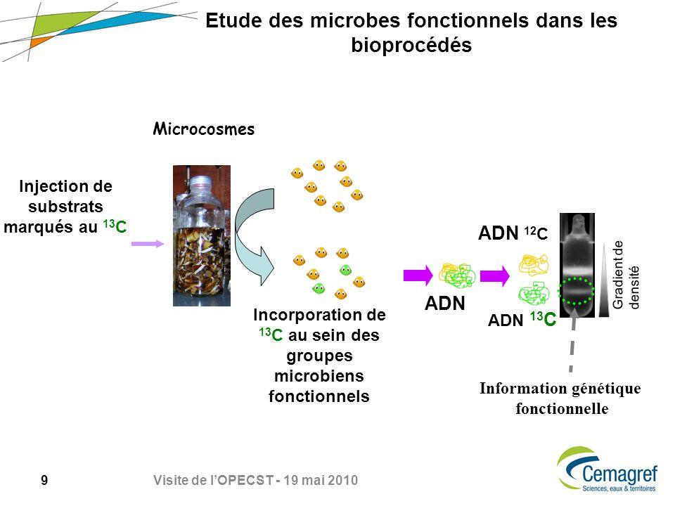 Etude des microbes fonctionnels dans les bioprocédés