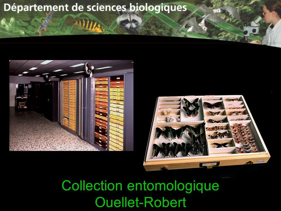Collection entomologique Ouellet-Robert