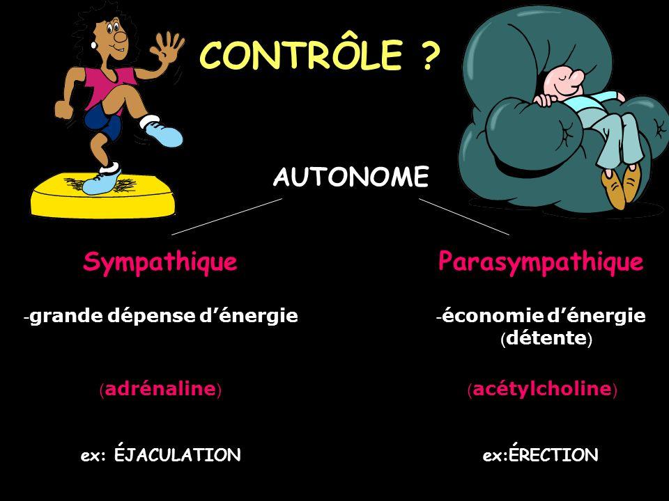 CONTRÔLE AUTONOME Sympathique Parasympathique (détente)
