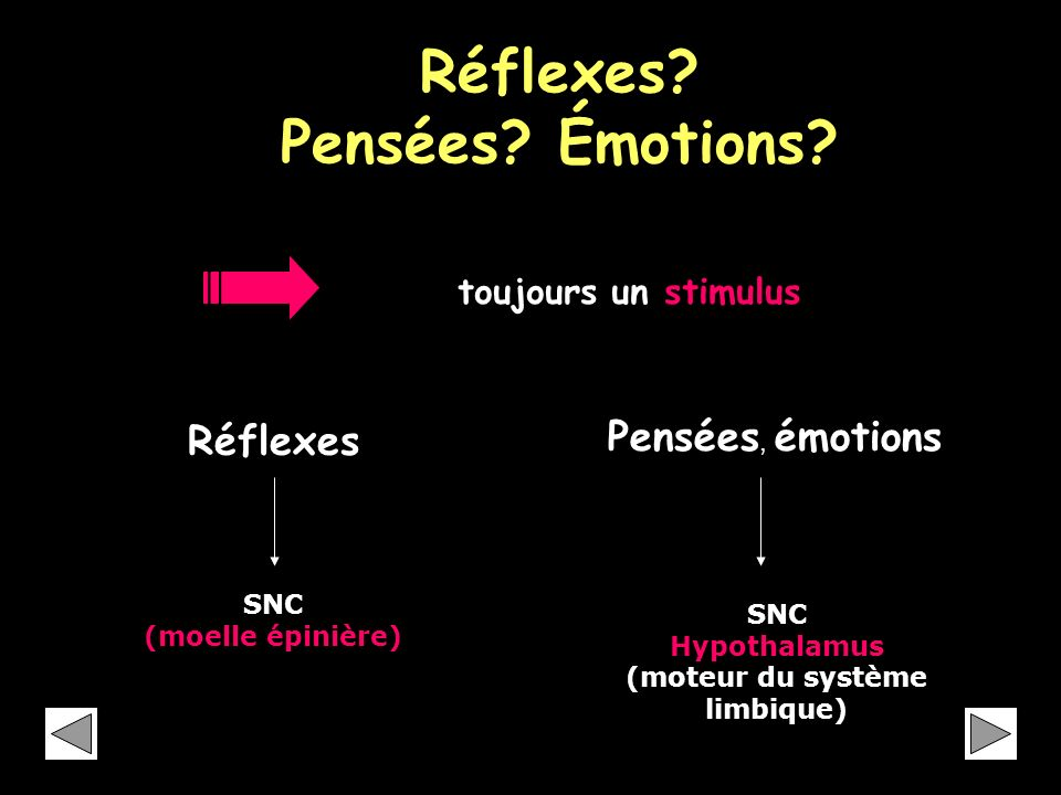 Réflexes Pensées Émotions