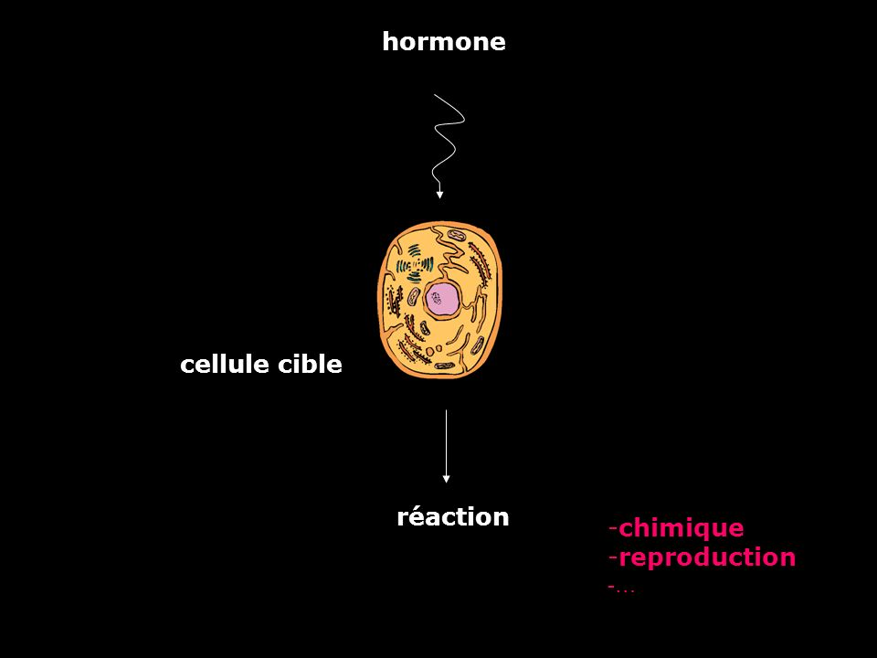 hormone cellule cible réaction chimique reproduction …
