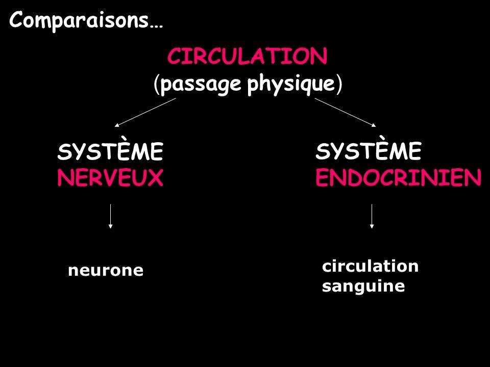 Comparaisons… CIRCULATION (passage physique) SYSTÈME NERVEUX SYSTÈME