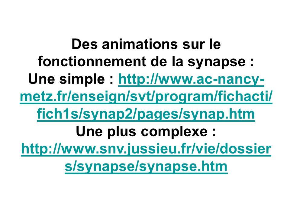 Des animations sur le fonctionnement de la synapse :