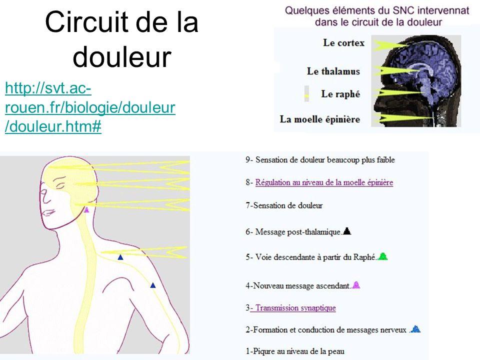 Circuit de la douleur http://svt.ac-rouen.fr/biologie/douleur/douleur.htm#