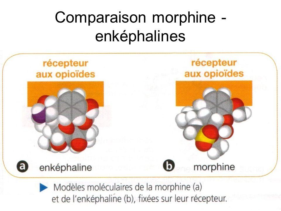 Comparaison morphine -enképhalines