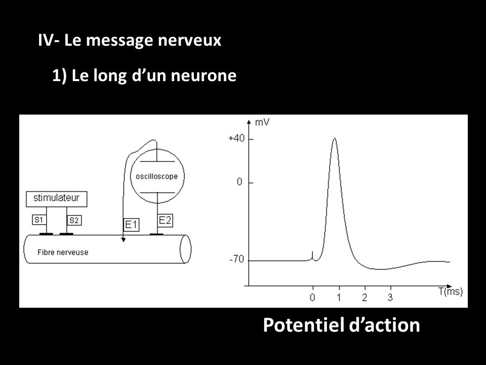 IV- Le message nerveux 1) Le long d'un neurone Potentiel d'action