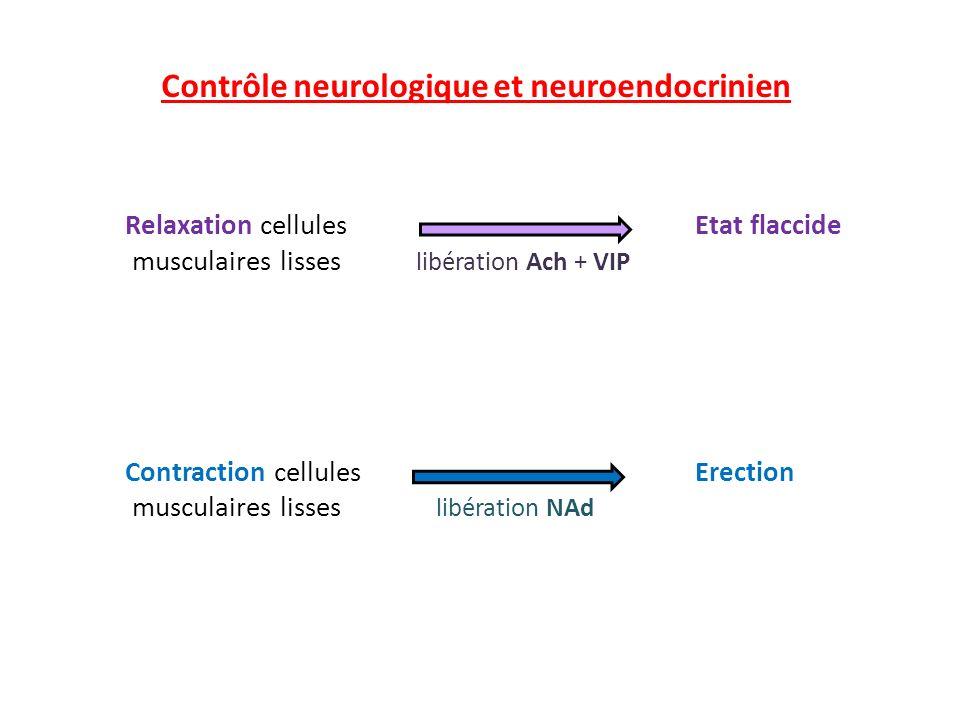 Contrôle neurologique et neuroendocrinien