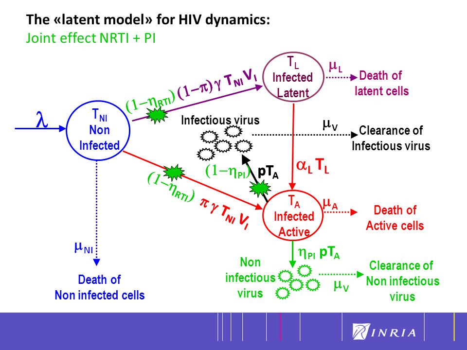 l aL TL The «latent model» for HIV dynamics: Joint effect NRTI + PI mL