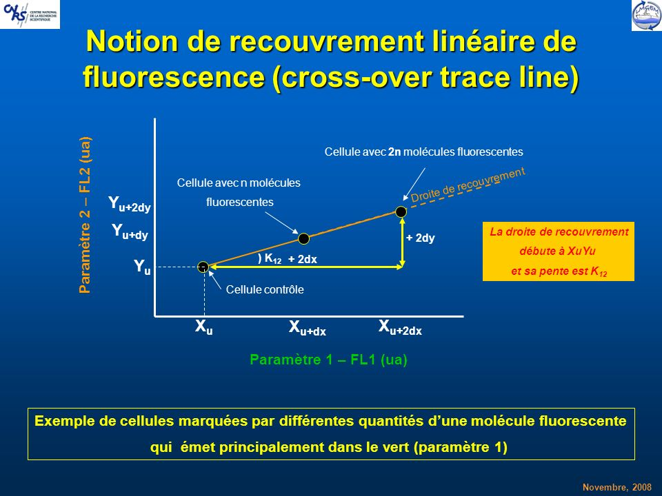 Notion de recouvrement linéaire de fluorescence (cross-over trace line)