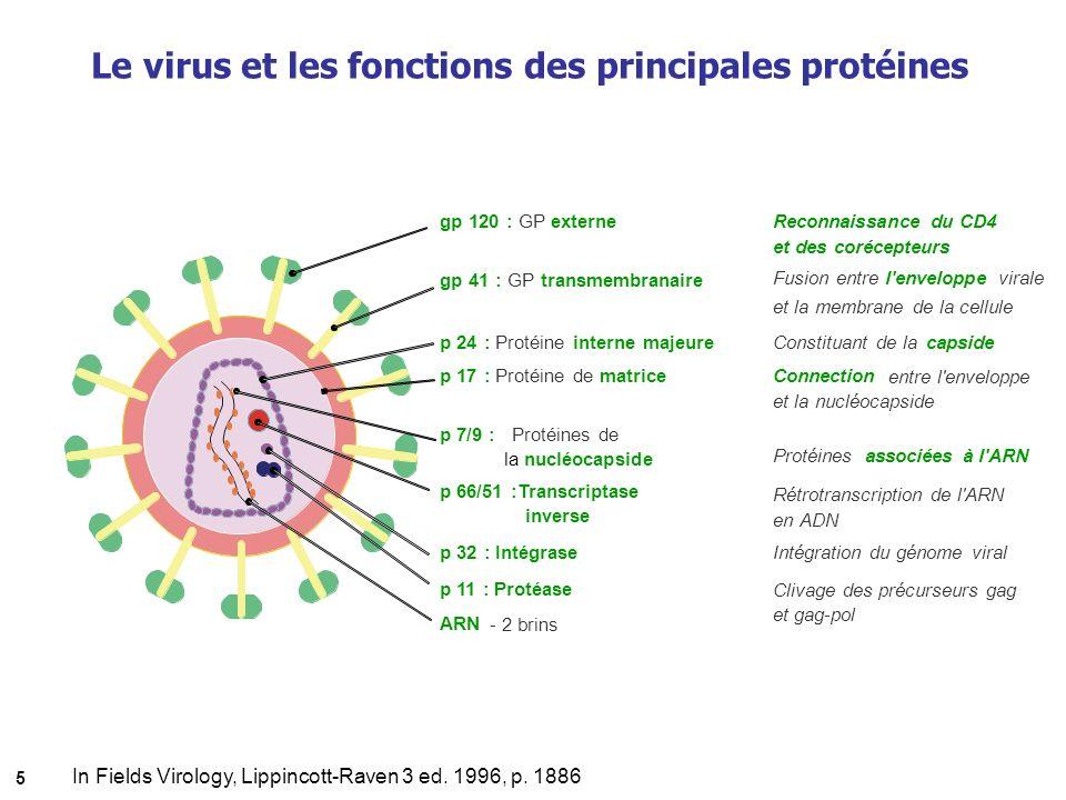 Le virus et les fonctions des principales protéines