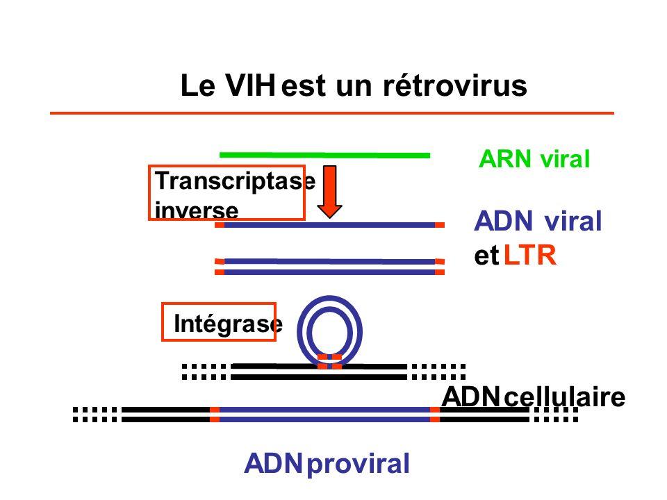 Le VIH est un rétrovirus ADN viral et LTR ADN cellulaire ADN proviral