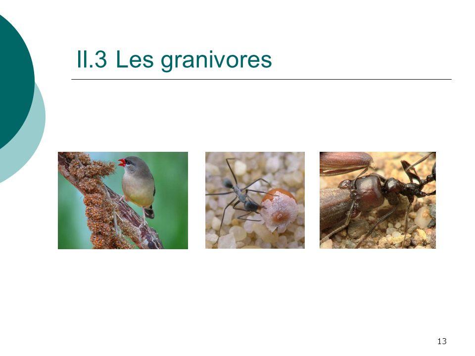 II.3 Les granivores peu d espèces sont exclusivement granivores