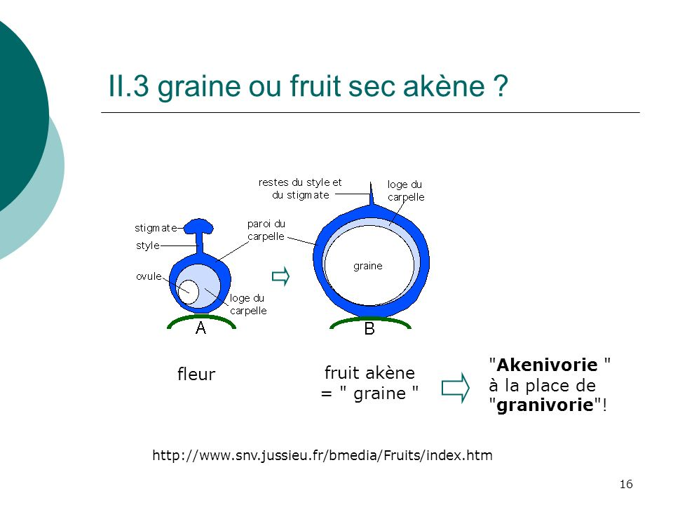 II.3 graine ou fruit sec akène