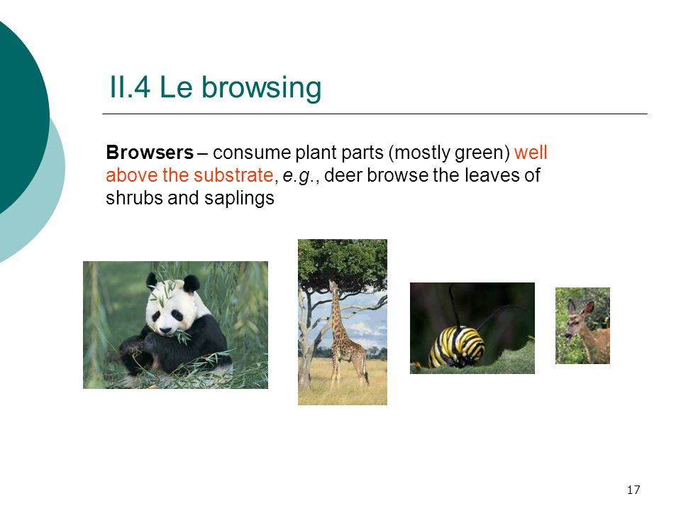II.4 Le browsing Browsers – consume plant parts (mostly green) well above the substrate, e.g., deer browse the leaves of shrubs and saplings.