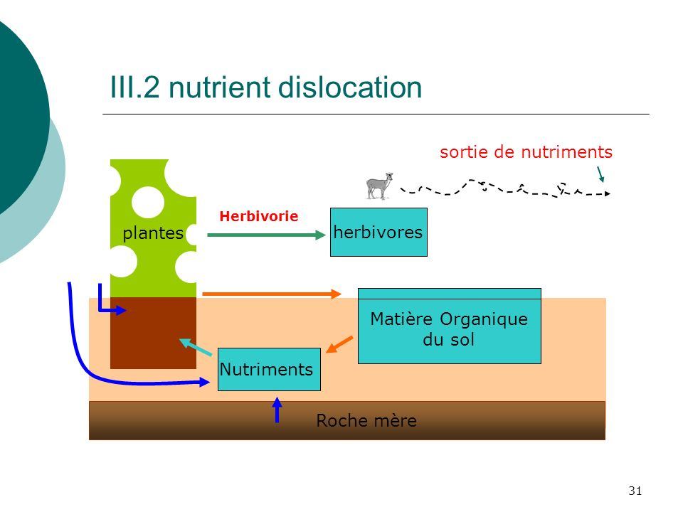 III.2 nutrient dislocation
