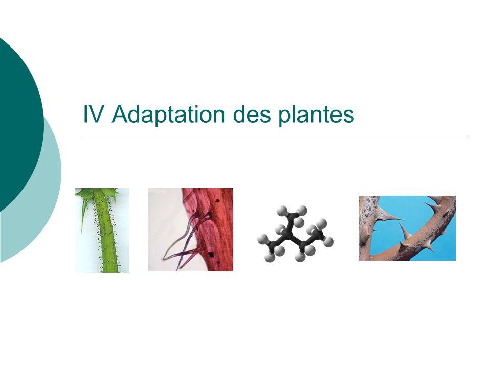 IV Adaptation des plantes