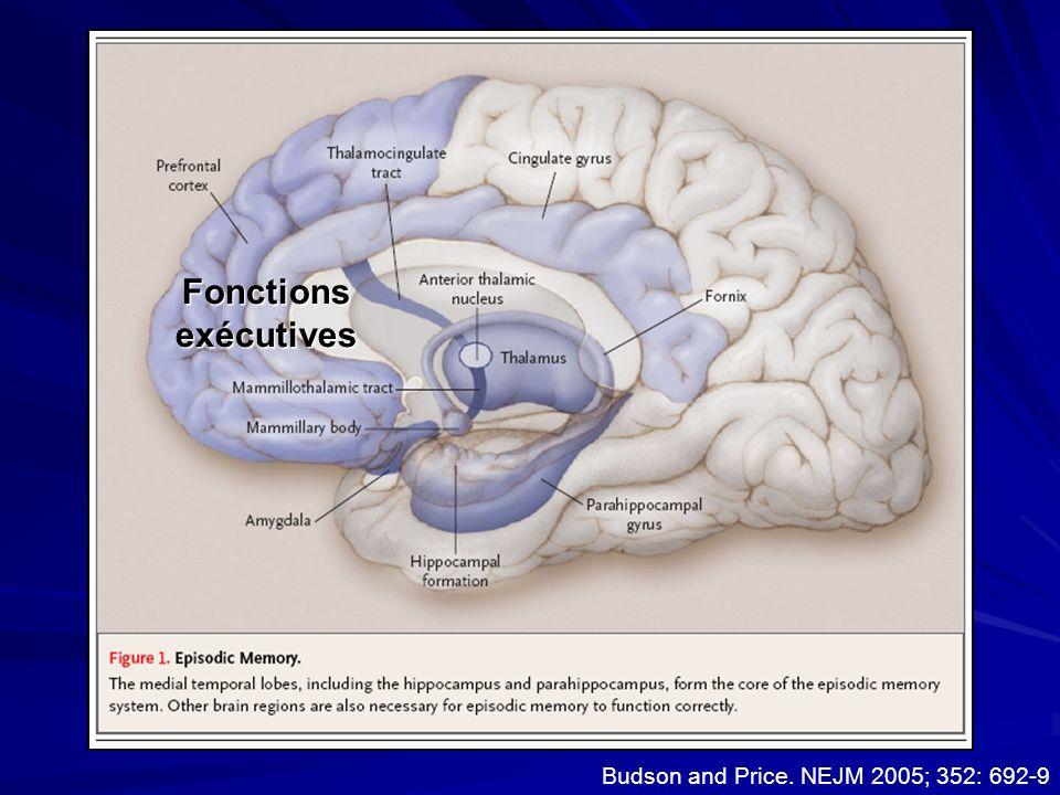 Episodic memory anatomy