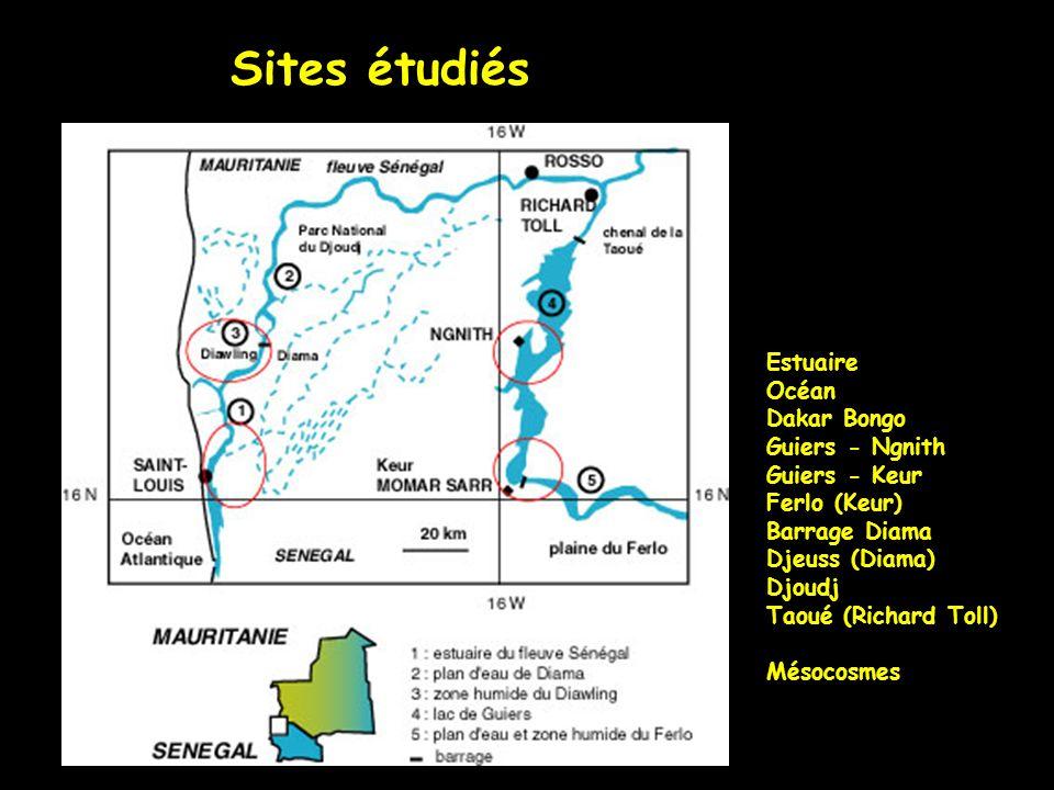 Sites étudiés Estuaire Océan Dakar Bongo Guiers - Ngnith Guiers - Keur