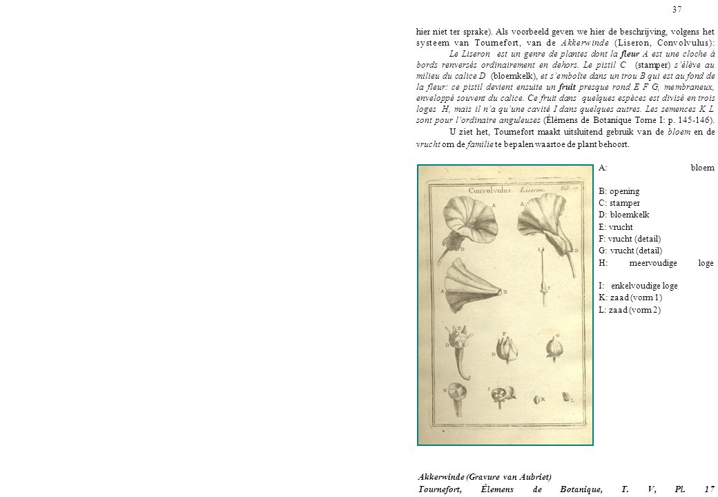 37 hier niet ter sprake). Als voorbeeld geven we hier de beschrijving, volgens het systeem van Tournefort, van de Akkerwinde (Liseron, Convolvulus):