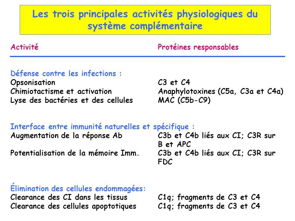 Les trois principales activités physiologiques du système complémentaire