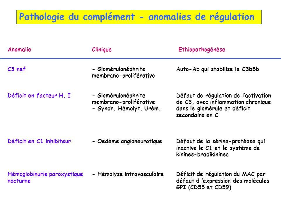 Pathologie du complément - anomalies de régulation