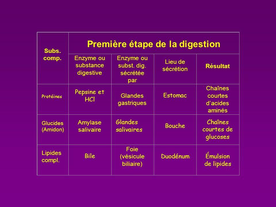 Digestion Chimique Des Aliments Ppt Video Online T 233 L 233 Charger