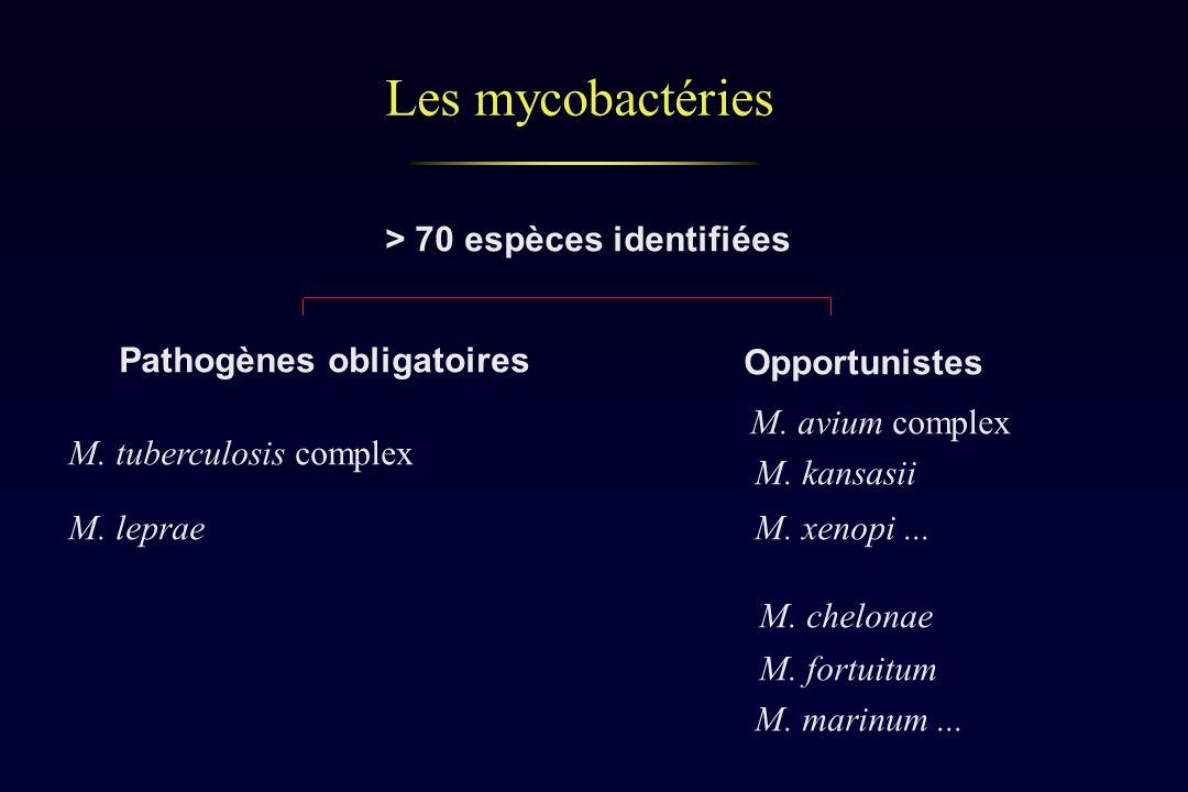 Les mycobactéries > 70 espèces identifiées Pathogènes obligatoires