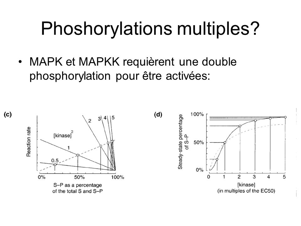 Phoshorylations multiples