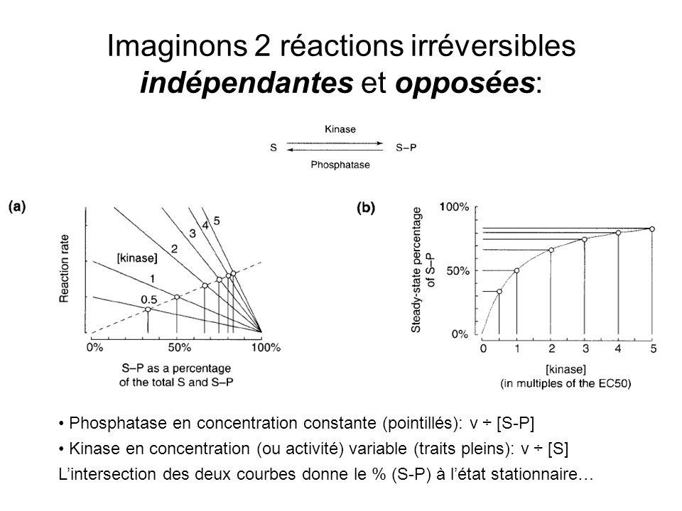 Imaginons 2 réactions irréversibles indépendantes et opposées: