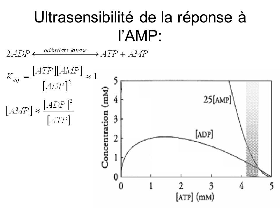 Ultrasensibilité de la réponse à l'AMP: