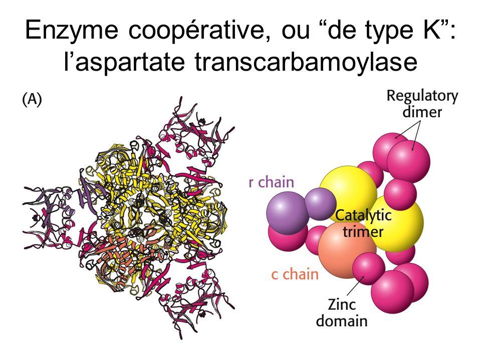 Enzyme coopérative, ou de type K : l'aspartate transcarbamoylase