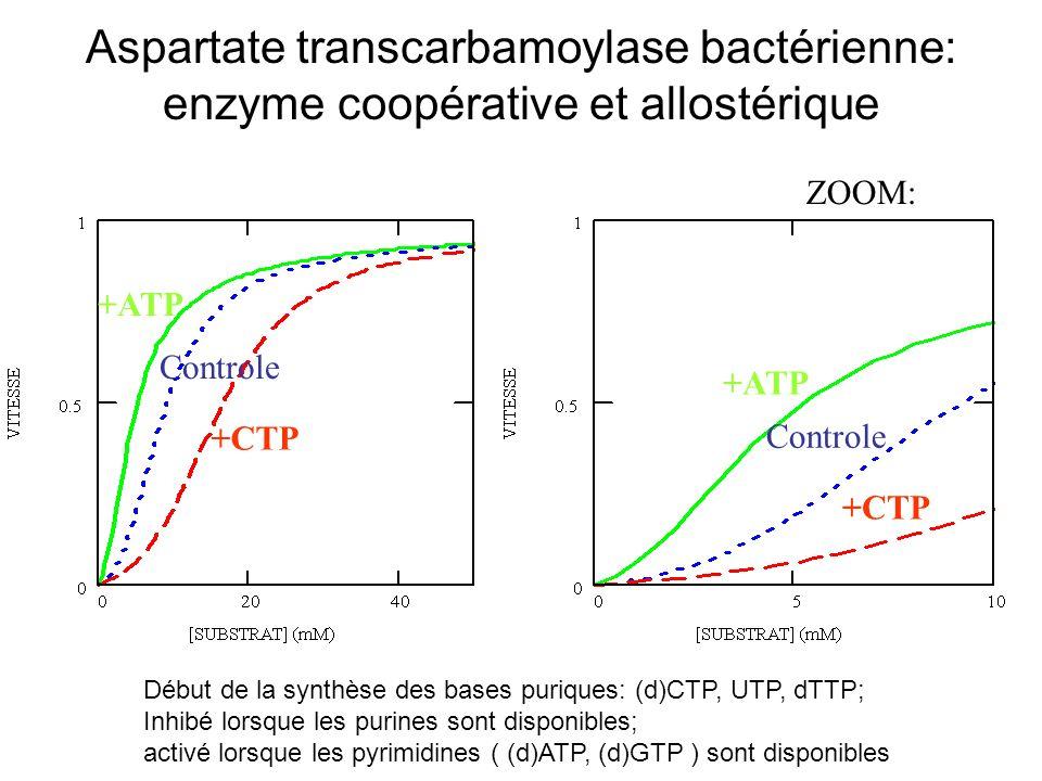Aspartate transcarbamoylase bactérienne: enzyme coopérative et allostérique