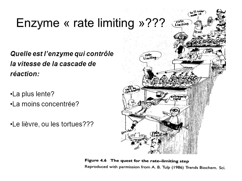 Enzyme « rate limiting »