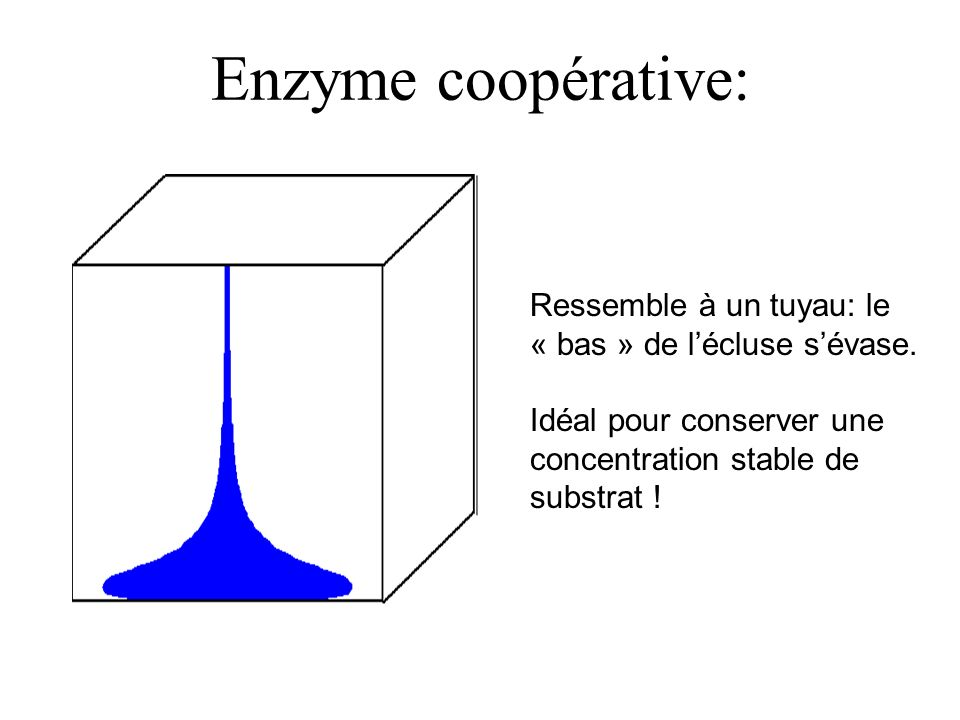 Enzyme coopérative: Ressemble à un tuyau: le « bas » de l'écluse s'évase.