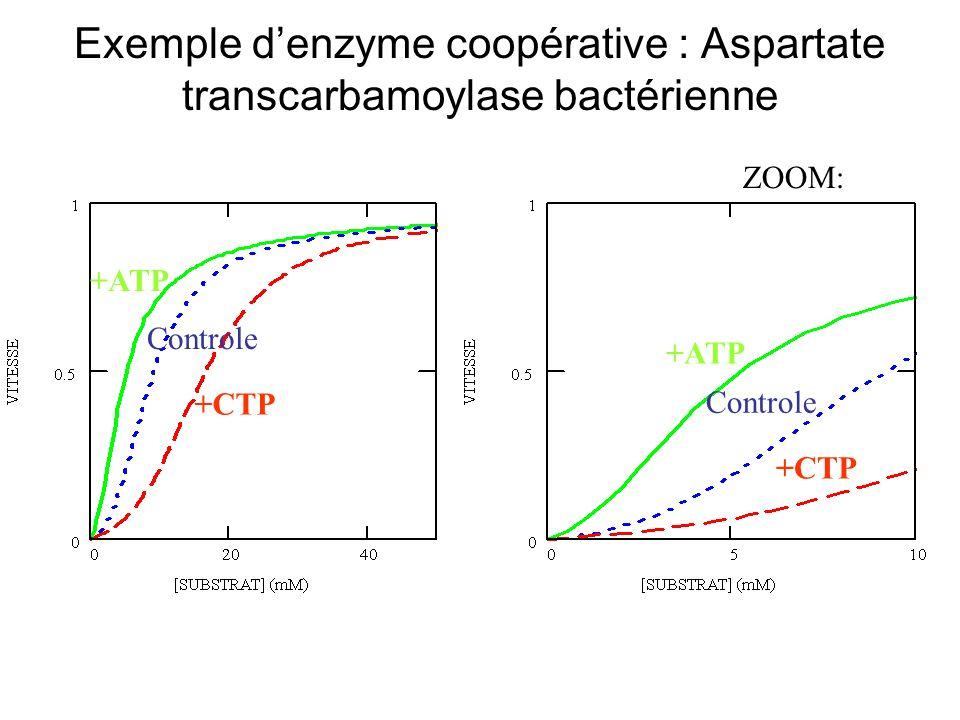 Exemple d'enzyme coopérative : Aspartate transcarbamoylase bactérienne