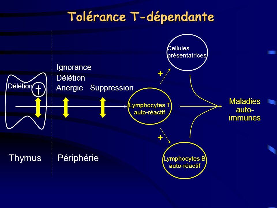 Tolérance T-dépendante