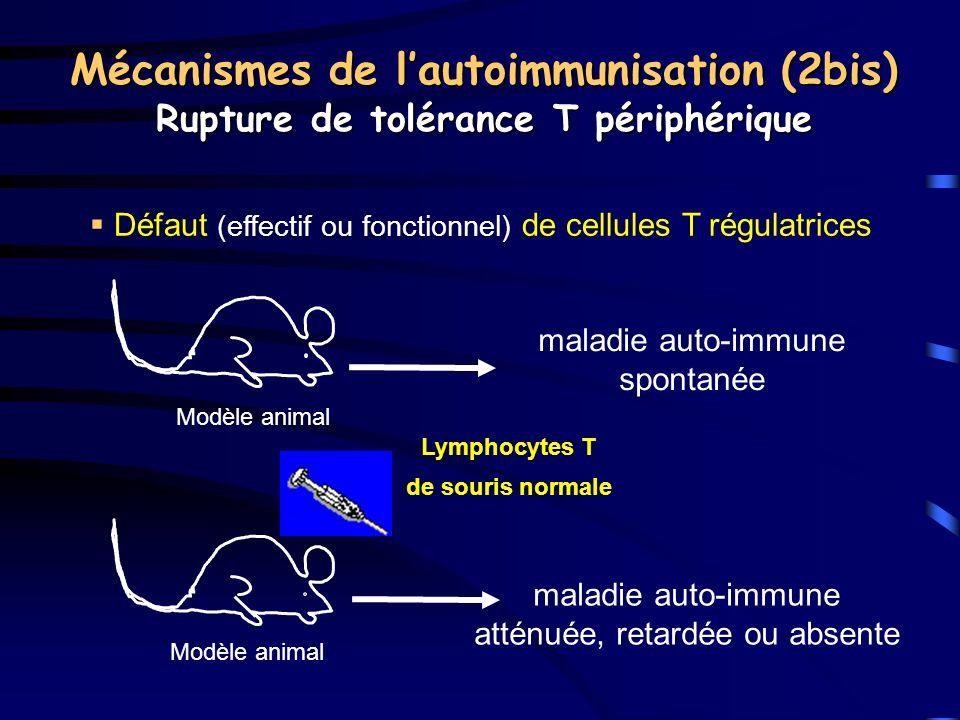 Mécanismes de l'autoimmunisation (2bis)