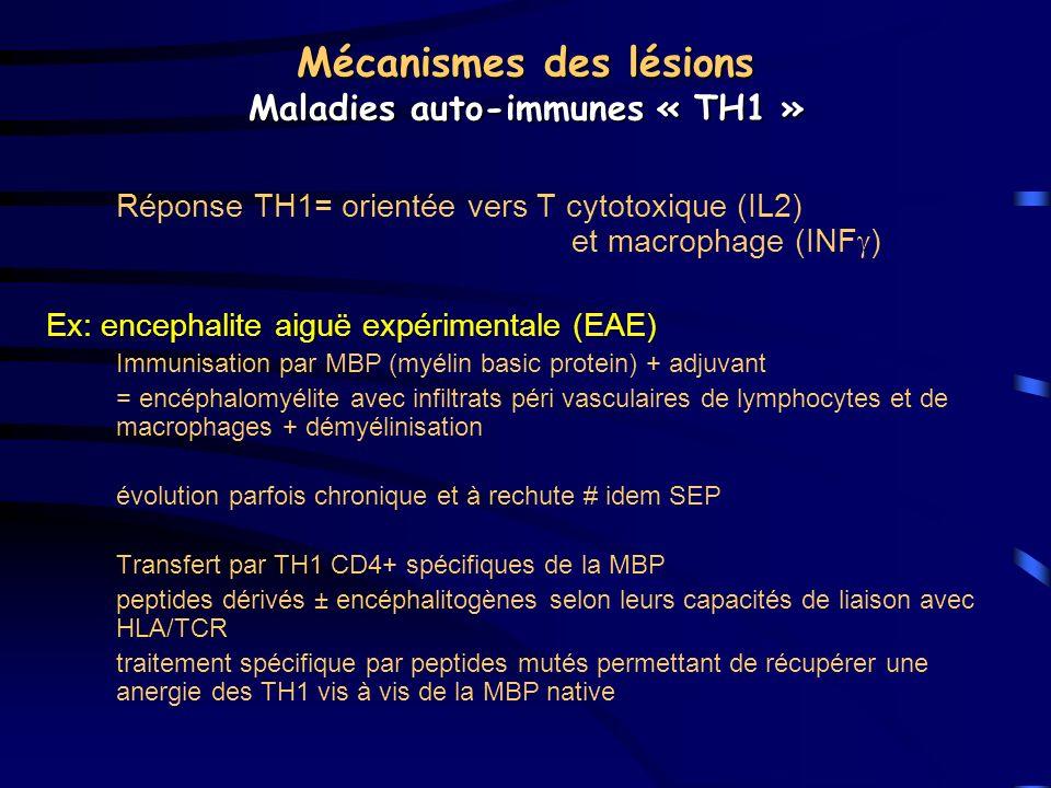 Mécanismes des lésions Maladies auto-immunes « TH1 »