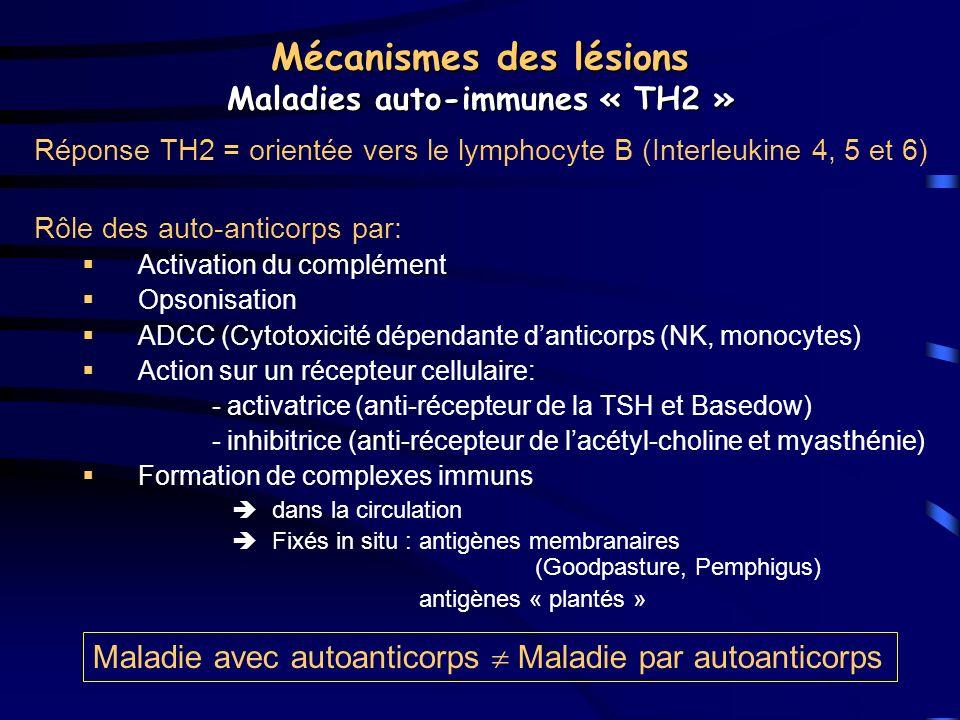 Mécanismes des lésions Maladies auto-immunes « TH2 »
