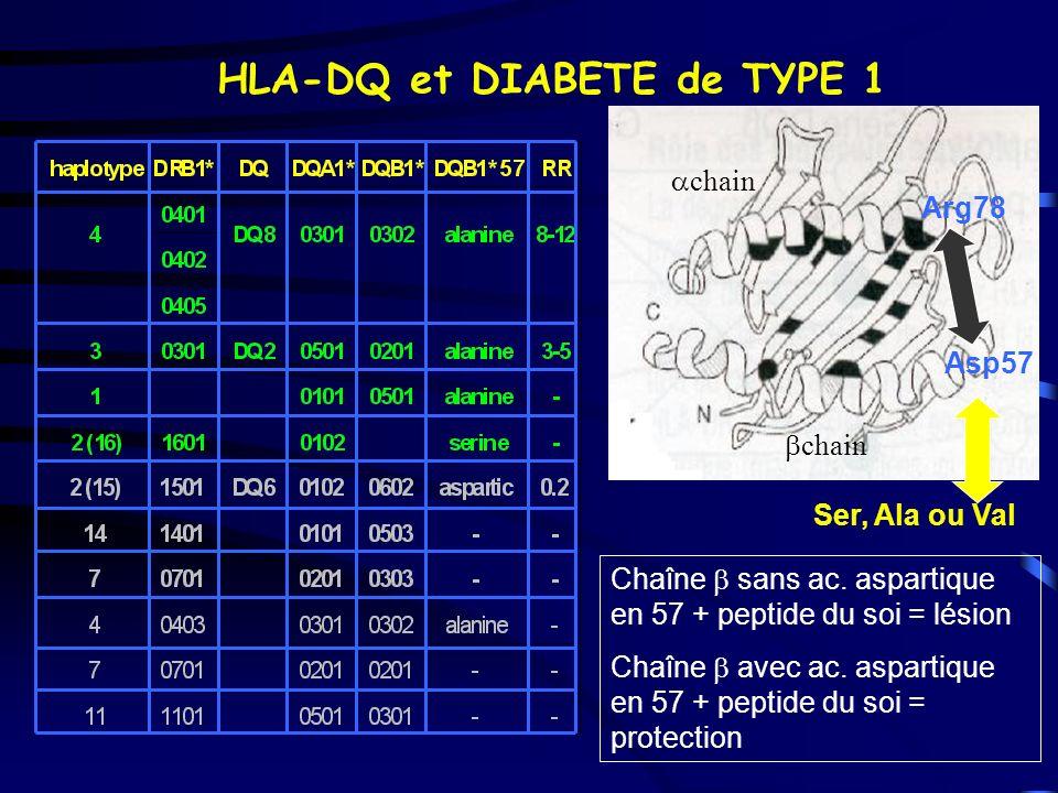 HLA-DQ et DIABETE de TYPE 1