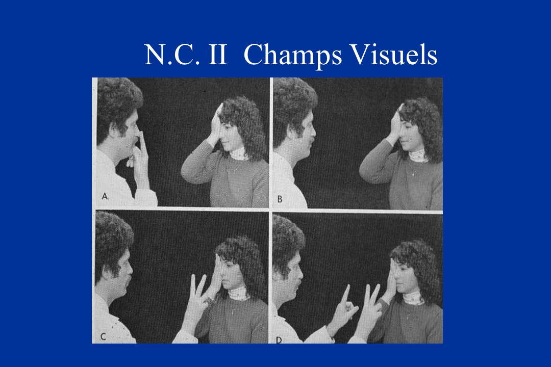 N.C. II Champs Visuels
