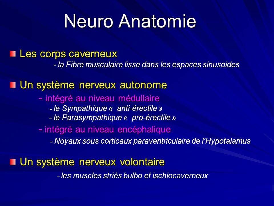 Neuro Anatomie Les corps caverneux Un système nerveux autonome