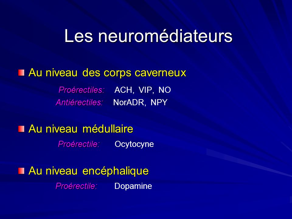 Les neuromédiateurs Au niveau des corps caverneux