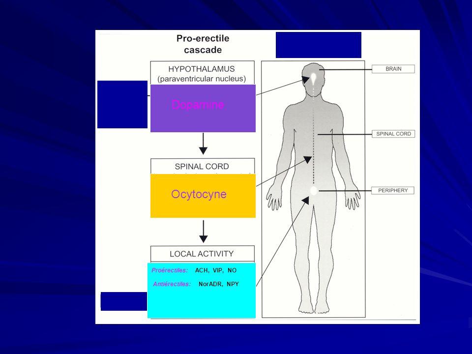 Dopamine Ocytocyne Proérectiles: ACH, VIP, NO