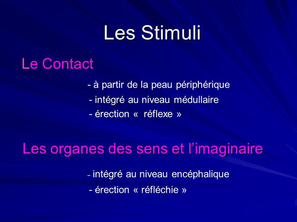 Les organes des sens et l'imaginaire - intégré au niveau encéphalique