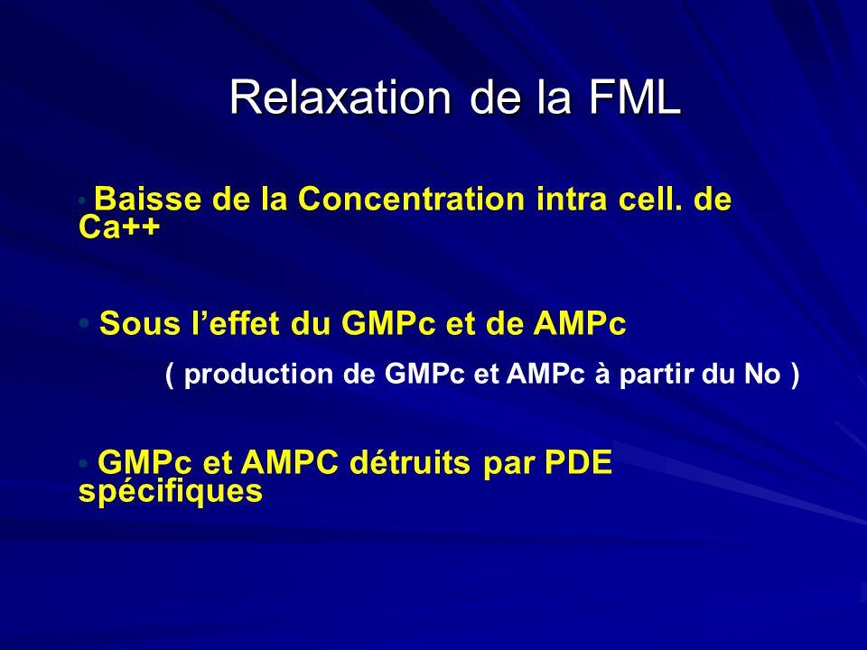 Relaxation de la FML • Sous l'effet du GMPc et de AMPc