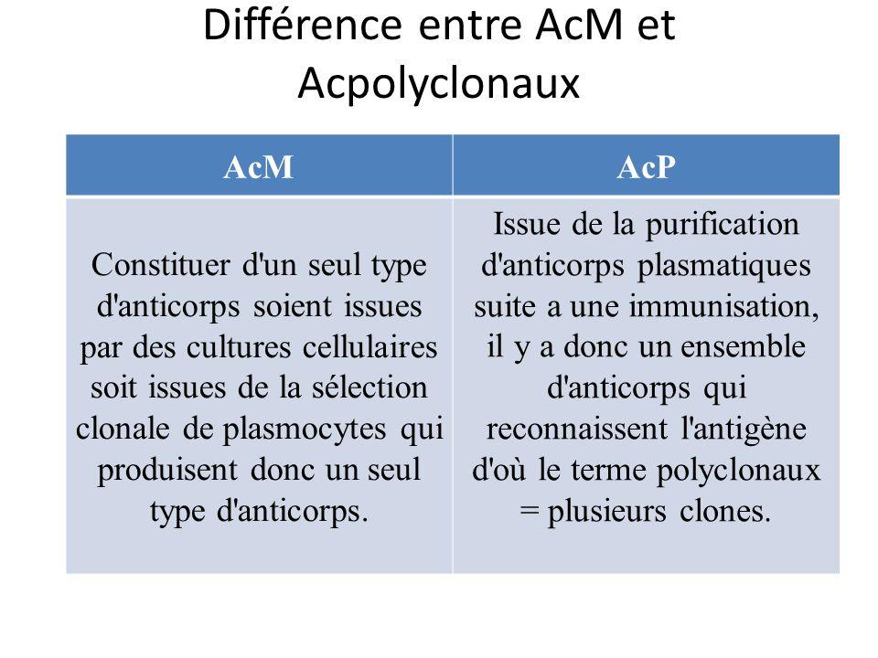 Différence entre AcM et Acpolyclonaux
