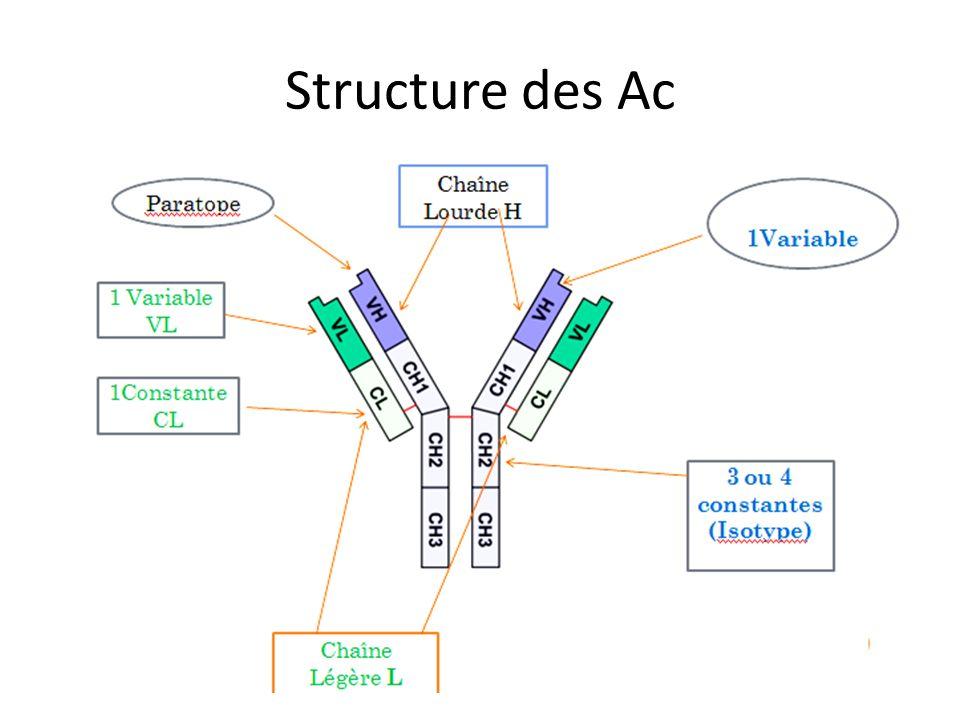 Structure des Ac