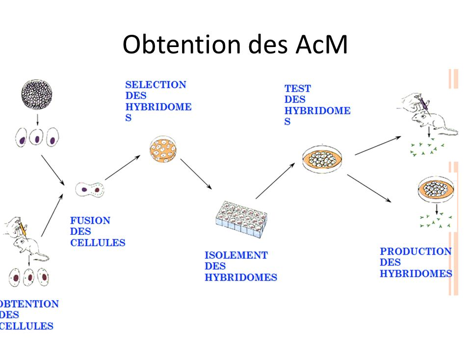 Obtention des AcM